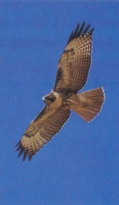 soar-with-the-wind